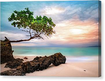 Canvas Print featuring the photograph Seagrape Tree by Mihai Andritoiu