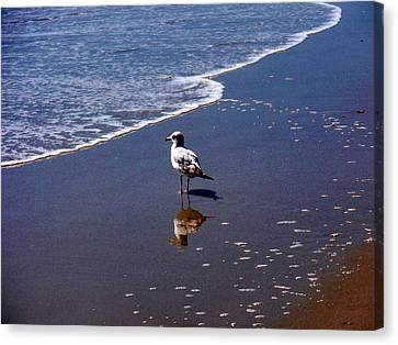Canvas Print featuring the photograph Seagull At Myrtle Beach  by Beth Akerman