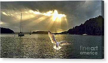 Seagull At Sunrise With Crepuscula Rays. Canvas Print by Geoff Childs