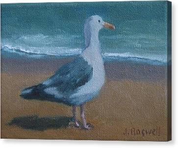 Seagull At The Beach Canvas Print