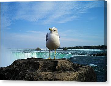 Seagull Checking Out The Photographers Canvas Print by Lawrence Christopher