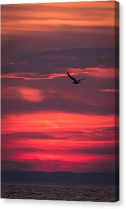 Seagull Flying At Sunset Jersey Shore Canvas Print by Terry DeLuco