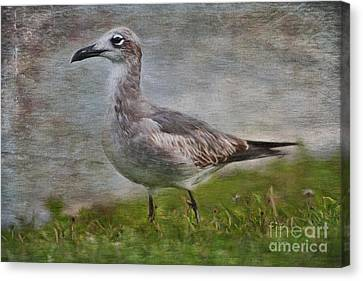 Seagull Friend Canvas Print by Deborah Benoit