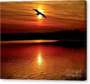 Seagull Homeward Bound Canvas Print by Carol F Austin