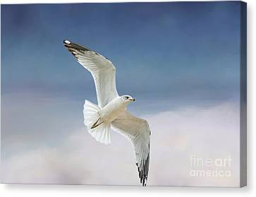 Flying Seagull Canvas Print - Seagull In Flight by Bonnie Barry