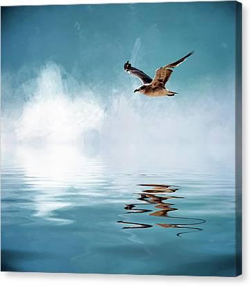 Seagull In Flight Canvas Print by Cyndy Doty
