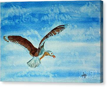 Seagull In Flight Canvas Print by Terri Mills