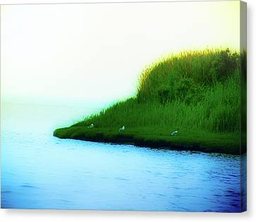 Seagull Island Canvas Print by Bill Cannon