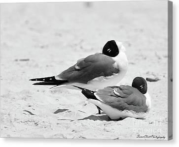 Seagull Nap Time Canvas Print