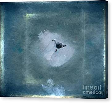 Seagull On Iceflow Canvas Print by Victoria Harrington