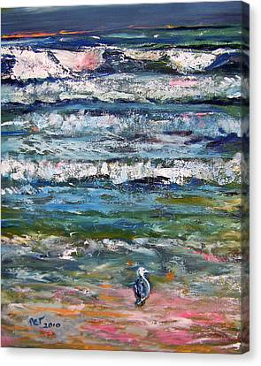 Patricia Taylor Canvas Print - Seagull On The Beach  by Patricia Taylor