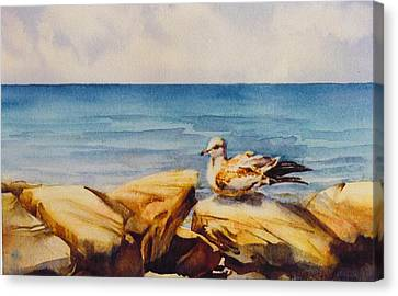 Seagull-on-the-rocks Canvas Print by Nancy Newman