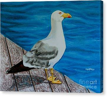 Seagull On The Shore - Gaviota En La Costa Canvas Print by Melvin Rodriguez
