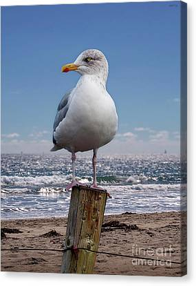 Seagull On The Shoreline Canvas Print