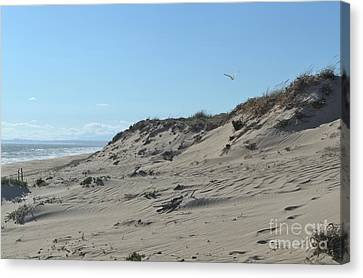 Closeup Canvas Print - Seagull Over The Beach Dunes by Angelo DeVal
