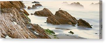 Seagull Perching On The Beach, Gaviota Canvas Print by Panoramic Images