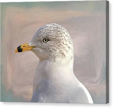 Seagull Portrait Canvas Print