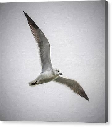 Seagull  Canvas Print by Scott Mullin