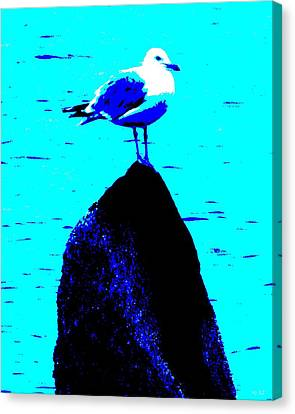 Seagull Scout Canvas Print by Rene Crystal
