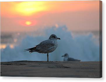 Seagull Seascape Sunrise Canvas Print