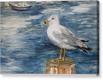 Seagull Canvas Print by Siona Koubek