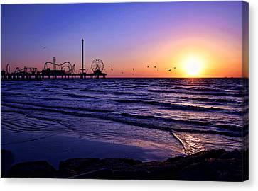 Seagull Sunrise Canvas Print