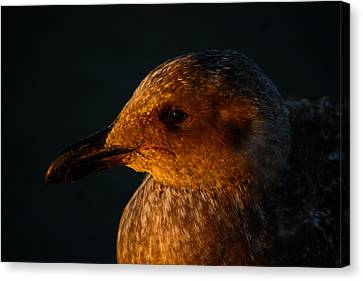 Canvas Print featuring the photograph Seagull Sunrise by Tikvah's Hope