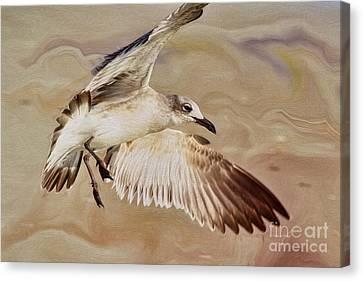 Seagull Swirl Canvas Print by Deborah Benoit