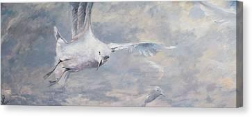 Seagull Canvas Print by Vali Irina Ciobanu