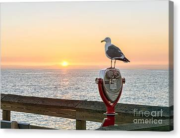 Seagull Watching The Sunset Canvas Print by Eddie Yerkish