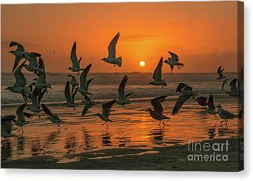 Seagulls At Sunrise Canvas Print by Edie Ann Mendenhall