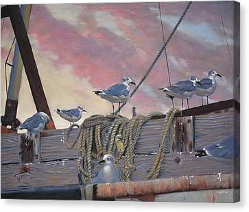 Seagull's Delight Canvas Print by Christopher Reid
