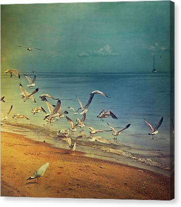 Medium Group Of People Canvas Print - Seagulls Flying by Istvan Kadar Photography
