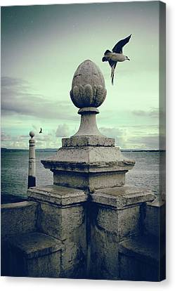 Canvas Print featuring the photograph Seagulls In Columns Dock by Carlos Caetano