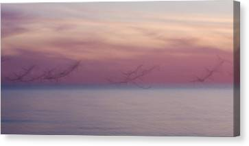 Seagulls In Motion Canvas Print
