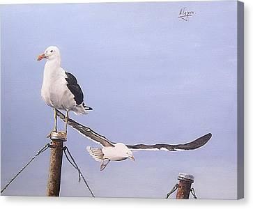 Seagulls Canvas Print by Natalia Tejera