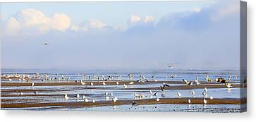 Seagulls On A Beach Canvas Print by Svetlana Sewell