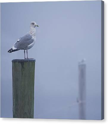 Seagulls On Pilings In Mystic Ct Canvas Print by Kirkodd Photography Of New England