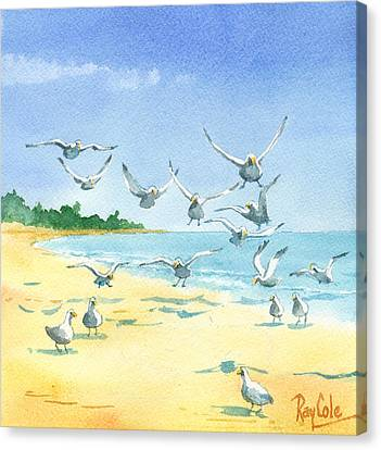 Seagulls Canvas Print by Ray Cole