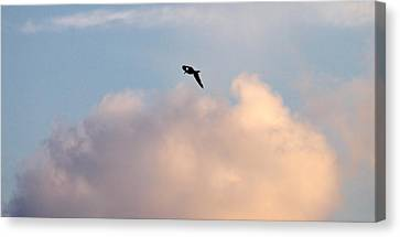 Canvas Print featuring the photograph Seagull's Sky 3 by Jouko Lehto