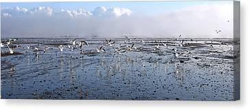 Seagulls Canvas Print by Svetlana Sewell