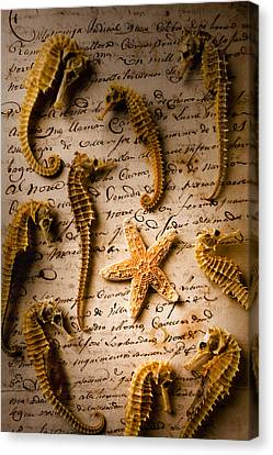 Seahorses And Starfish On Old Letter Canvas Print by Garry Gay