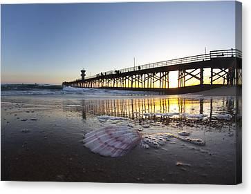 Seal Beach Shell Canvas Print by Sean Davey