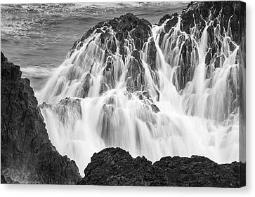 Seal Rock 6021 Canvas Print