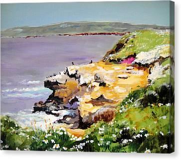 Seals In The Sun Lajolla Ca Canvas Print
