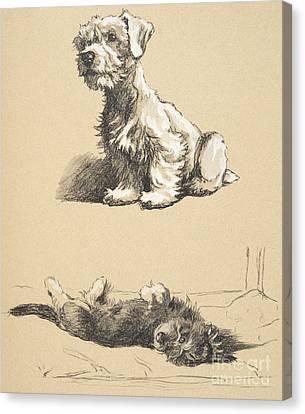 Aldin Canvas Print - Sealyham And Rough Dachund Puppy, 1930 by Cecil Charles Windsor Aldin