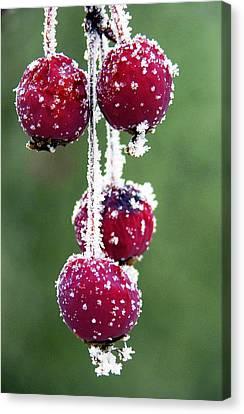 Seasonal Colors Canvas Print