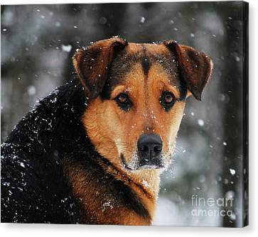 Canvas Print featuring the photograph Search And Rescue Dog by Lila Fisher-Wenzel