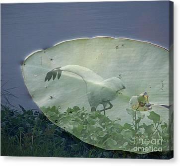Search Canvas Print by Priscilla Richardson
