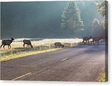 Searching For Greener Grass Canvas Print